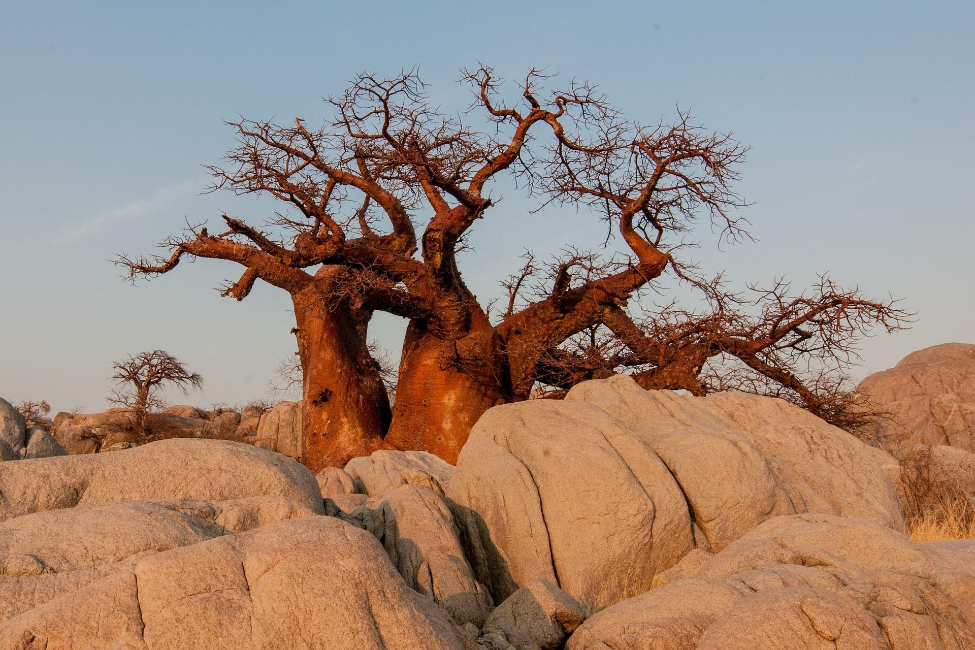 Baobab Eine Frucht Mit Vielen Samen Jalda Eu