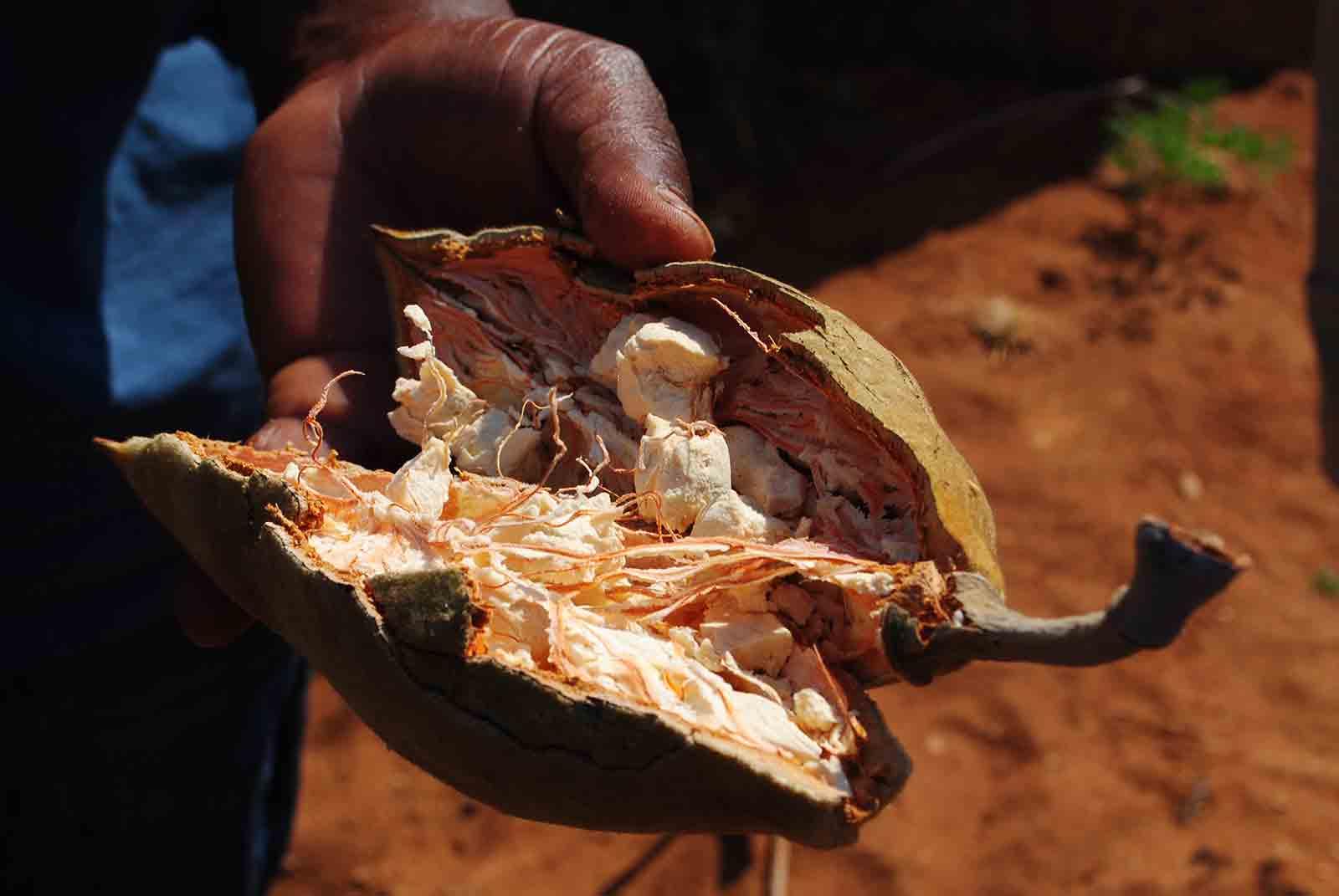 Baobaboel_aus-der-Baobabfrucht_Jalda-eu